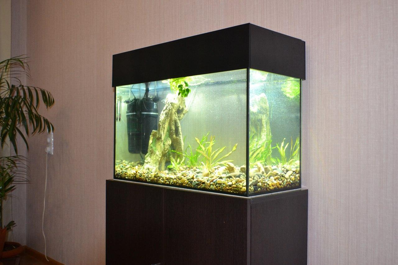 важно фото узких аквариумов этот раз