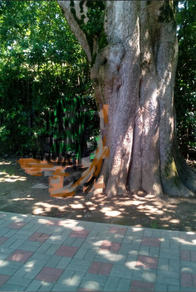 Древнее дерево в Улан-Удэ