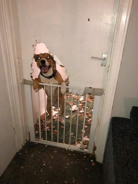 0_mpm_dog_destroys_door-1-768x1024wtmk1.thumb.jpg.8f6cfab4ec273fe26c305fe9177bee22.jpg