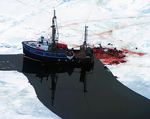 seal-murder_s.jpg