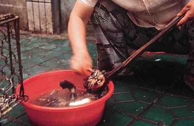 Китайцы ели котов
