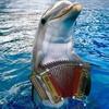 _delphin_